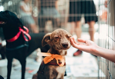 South West Pet Cremations | Pet Cremations in Bunbury